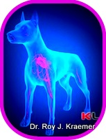 Laser Therapy for pets (dogs and cats) offered by Dr. Kraemer