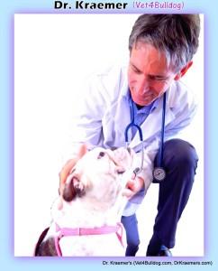 Dr. Kraemer Vet4Bulldog Bulldog Specialist