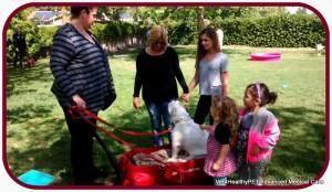 SCBR bulldog rescue adaption weekend at Dr. Kraemer new hospital (vet4heathlypet)