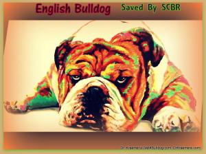 The English bulldog and The English Bulldog Puppy