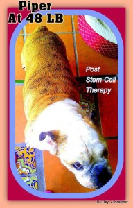 stem cell for pets inflammatory bowel disease