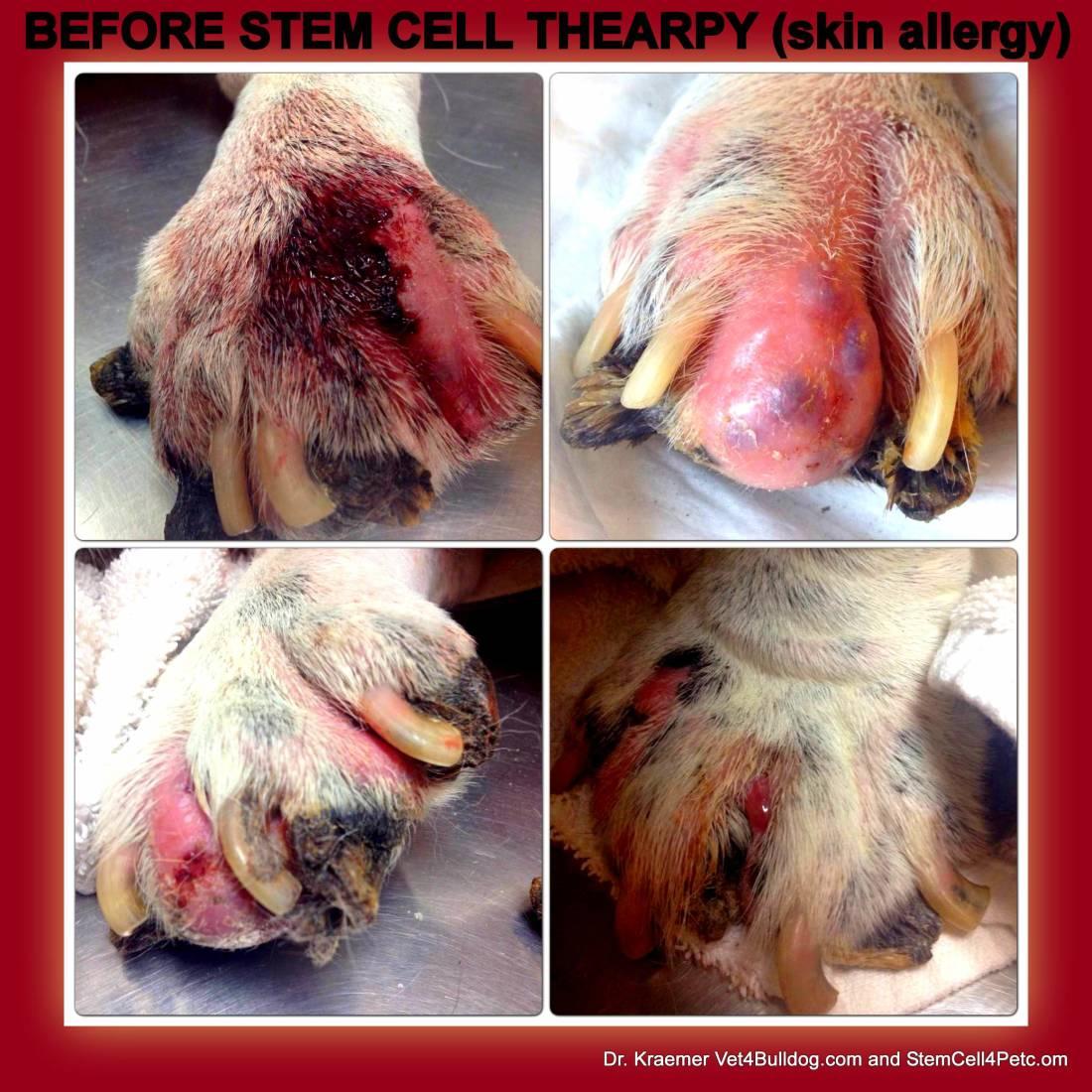Canine facial dermatitis