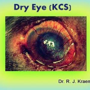 Dry Eyes Bulldogs KCS
