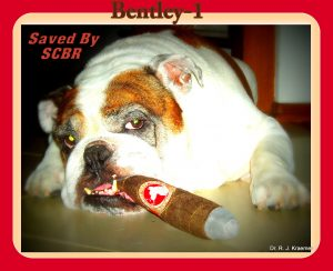 Breathing Problems in Bulldogs and French Bulldogs (Dr. Kraemer)