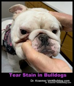 Tear Stains in Bulldogs and French Bulldogs