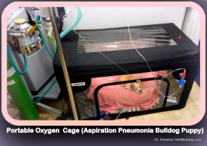 Aspiration Pneumonia in Bulldogs and French Bulldogs portable oxygen cage