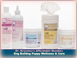 English bulldog and The English Bulldog Puppy WELLNESS